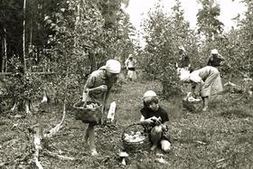 Профилактика заболеваний в годы Великой Отечественной войны